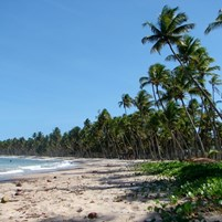 coqueiral-praia-da-cueira-em-boipeba