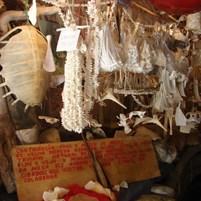 ossos-do-museu-ilha-de-boipeba