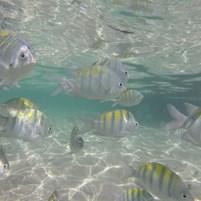 passeio-volta-ilha-de-boipeba-peixinhos
