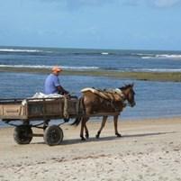 carroca-na-ilha-de-boipeba