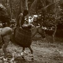 populacao-e-povoados-da-ilha-de-boipeba-1
