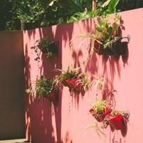 flores-no-abaquar-hostel-ilha-de-boipeba