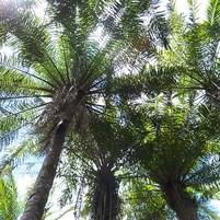 fauna-e-flora-ilha-de-boipeba-2