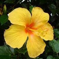 fauna-e-flora-ilha-de-boipeba-9