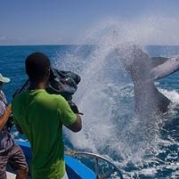 baleias-jubarte-morro-de-sao-paulo