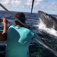 observacao-da-baleia-jubarte