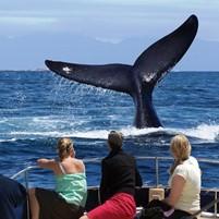 turismo-de-observacao-das-baleias