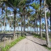 caminhadas-na-ilha-de-boipeba-4