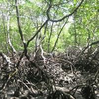 lindo-mangue-na-ilha-de-boipeba