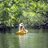 manguezais-ilha-de-boipeba