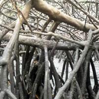 manguezais-na-ilha-de-boipeba