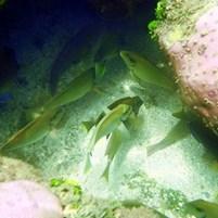 peixes-na-ilha-de-boipeba