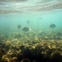 peixinhos-na-ilha-de-boipeba