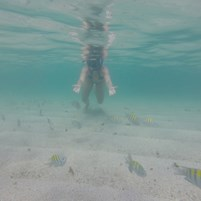 passeio-mergulho-ilha-de-boipeba-16