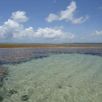 passeio-piscinas-corais-ilha-de-boipeba-13