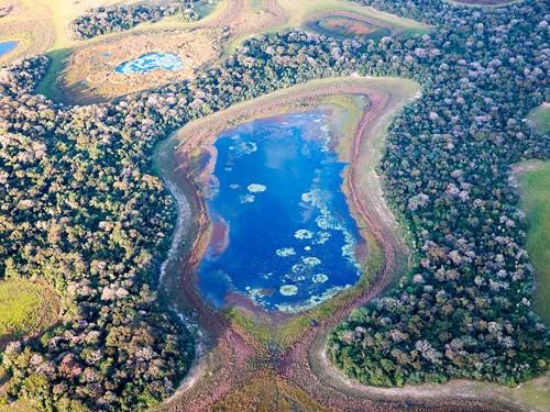 Pantanal-(1)