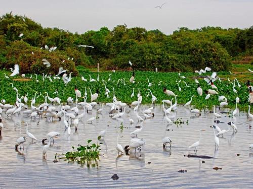 Pantanal-(2)