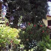 pousada aldeia boipeba (2)